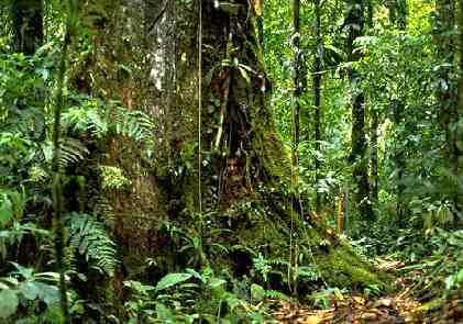 Amazon Rainforest by view world beauty (20)