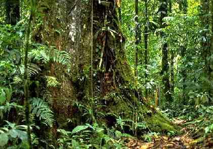 Amazon Rainforest by view world beauty (20)